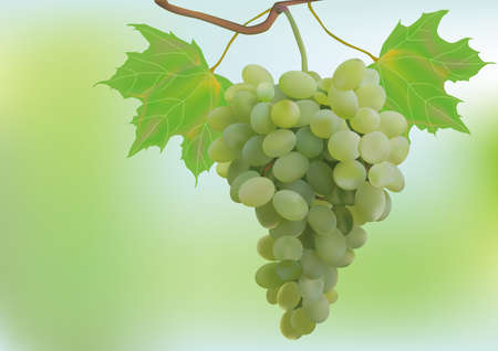 Autumn, grapes, postcard