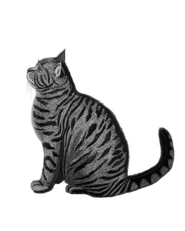 The most beautiful animals cats   Cat Stock Photo - 17581241