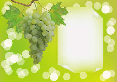 Advertising wine grapes Illustration