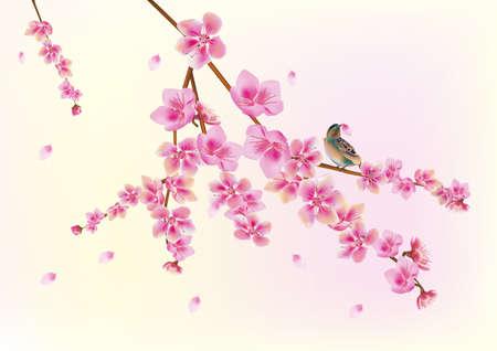 traditionally chinese: Sakura bird  postcard   menu
