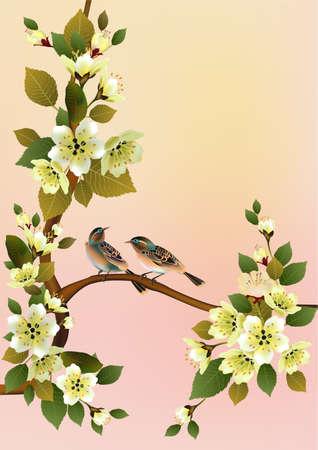sakura bird spring postcard .  Vector