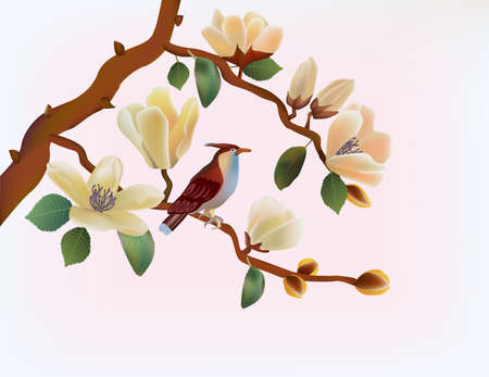 Blooming magnolia in spring, a bird sitting on a branch  Stock Vector - 18447034