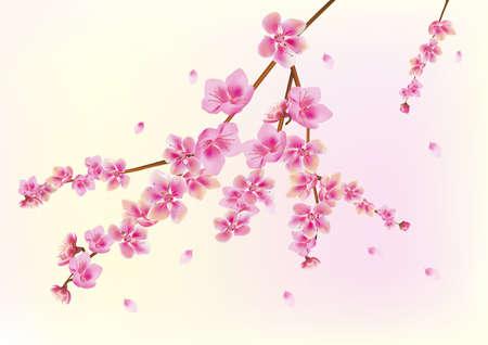 traditionally chinese: Sakura   postcard   menu Illustration