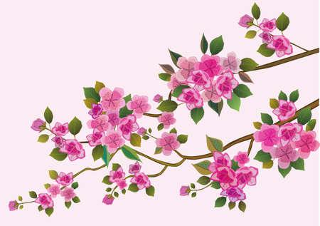 cherry blossom illustration: sakura ,bird , spring , postcard