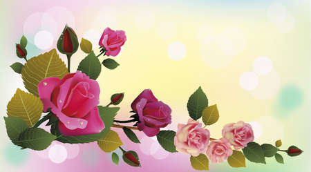 Rose the most beautiful flowers in the world  postcard    Illustration