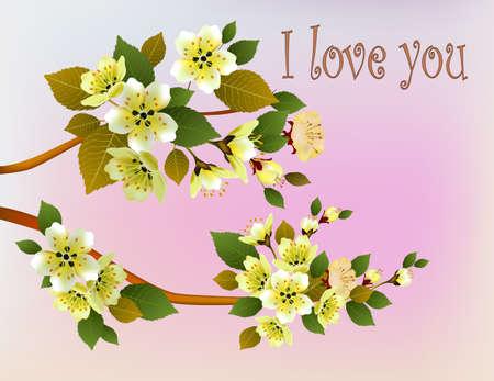 beck: Sakura, spring, Valentine Day.