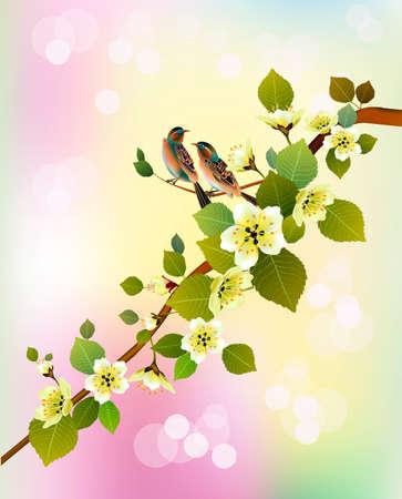 postcard: Sakura, bird. postcard. Illustration
