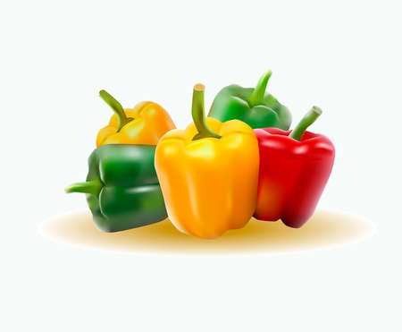 vector illustration of a realistic image of sweet pepper