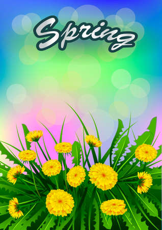 Spring text with dandelions flower design.