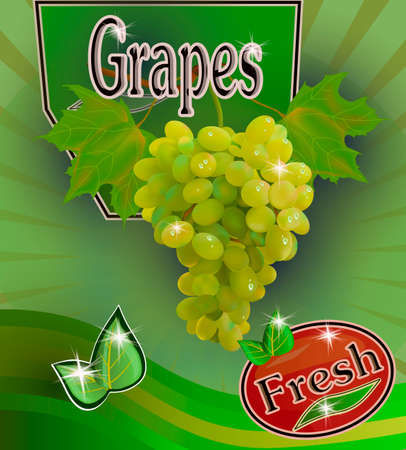 Vector illustration of advertising drinks from grapes. Fresh grapes juice Banner. Vectores
