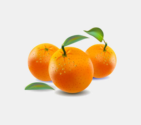 Vector illustration of oranges isolated on white background. Realistic vector. Vectores