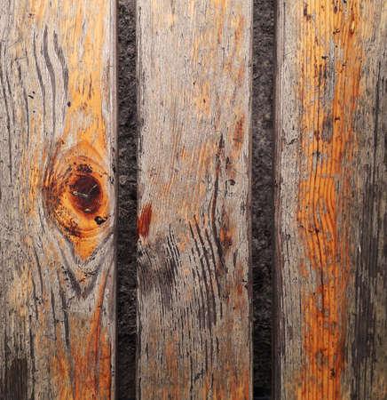 Background texture of tree, oak Banco de Imagens