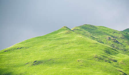 soft peak: Hill with green grass