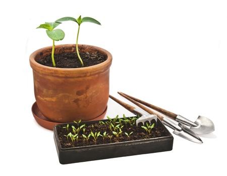 transplanting: Transplanting plants. Tools. Stock Photo