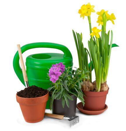 Transplanting plants  Tools