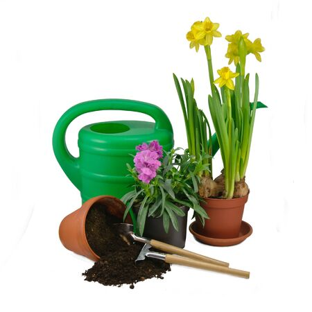 Transplanting plants  Tools photo