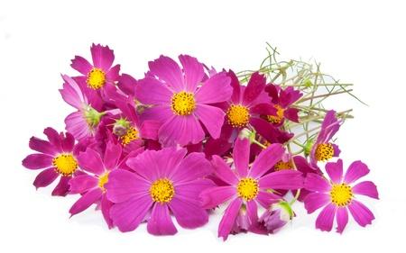 mazzo di fiori: Rosa fiori cosmo su uno sfondo bianco Archivio Fotografico