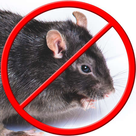 the rat is banned. crossed out with the NO sign