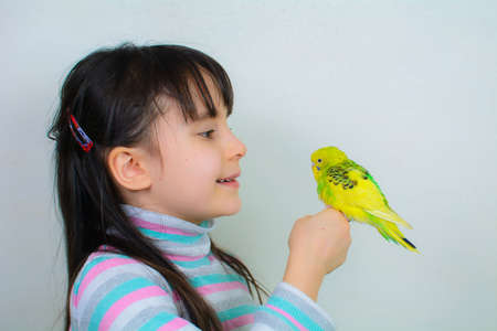 Cool budgie. A cute yellow budgerigar is sitting on the hand of a girl with long hair.