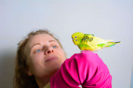 Funny budgie. A cute yellow budgie parrot is sitting on the girls hand.