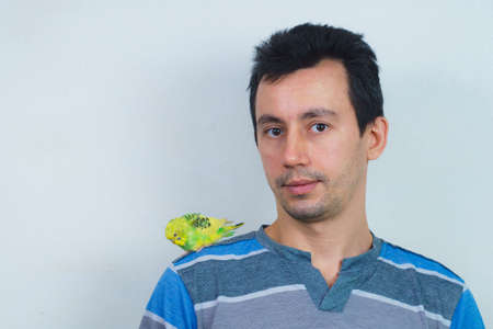 Cool budgie. A cute yellow budgie is sitting on a guy s shoulder.