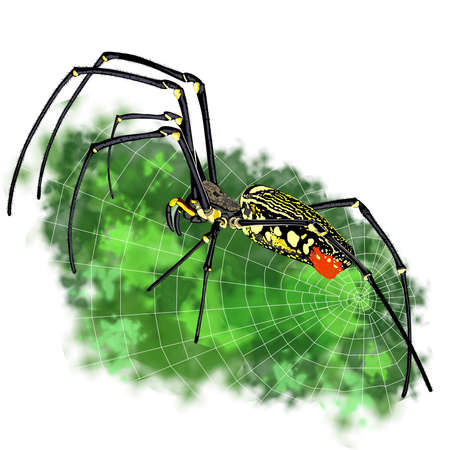 eight legs: Black with yellow spots tropical spider close-up Stock Photo