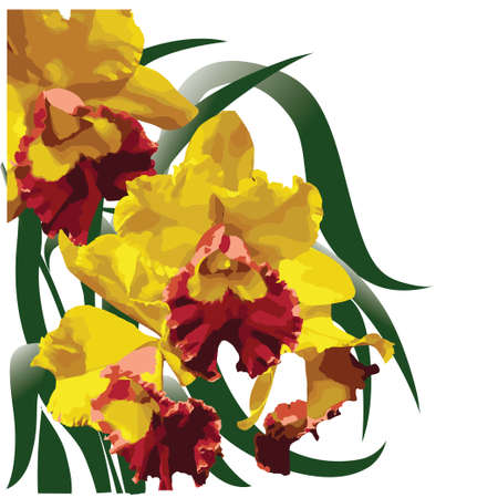 Yellow-red flowering orchid with green leaves - vector illustration