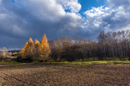 Autumn trees on the edge of arable land on a cloudy day Stock Photo
