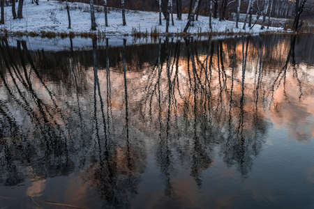 Bare trees, reflected on the surface of the lake at the decline of the autumn day