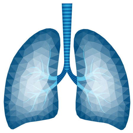 Image polygonale abstraite des poumons humains dans les tons bleus - illustration vectorielle