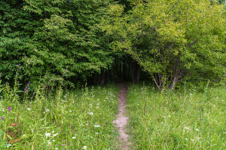 A path overgrown with grass leads into a linden grove in summer day