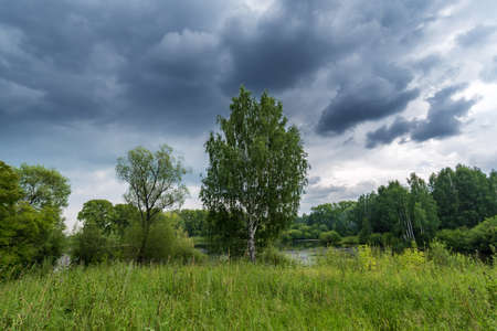 Cloudy summer landscape with trees, lawn, overgrown grass, and lake