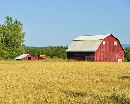 Red barn and wheat field