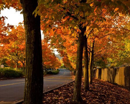 Beautiful Fall colors inGene Coulan Memorial Park in Renton, Wa Stock Photo