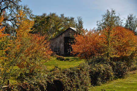 Old barn with fall colors