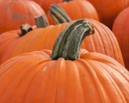 Fresh fall pumpkins for halloween