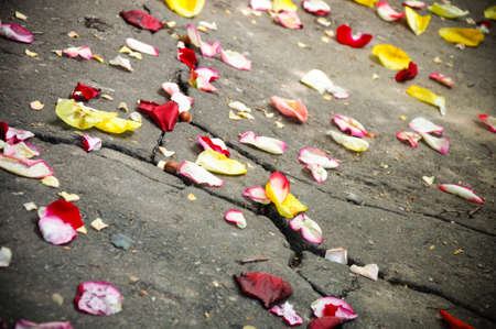 The road with petals of roses Stock Photo