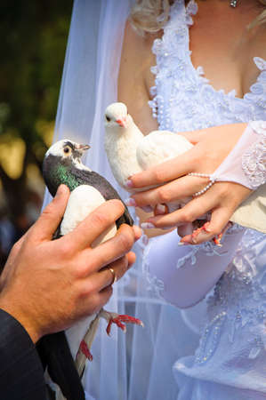 Pair of wedding pigeons in hands