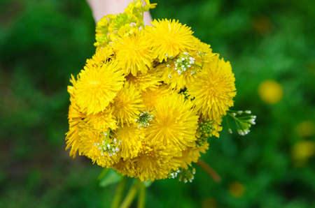hand holding bunch of bright yellow flowers on a blur green backgrounds