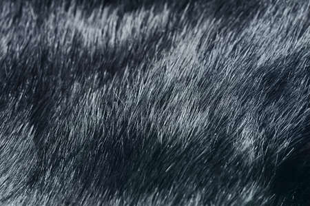 soft hair texture  Natural fur background Stock Photo - 18096578