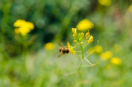 bee pollinating a flower. Green nature background. Heat season Stock Photo - 18559670