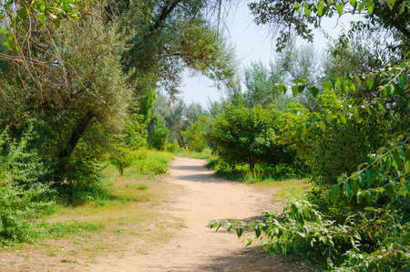 road through the green leafy garden  Nature background Stock Photo - 18925705