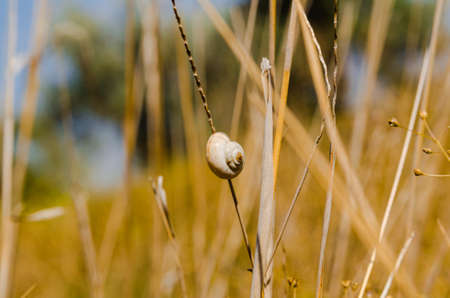 one small snail holding on plant stem  Nature background photo