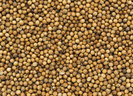 spicery: many small dried coriander seed  Food spicery backgrounds Stock Photo
