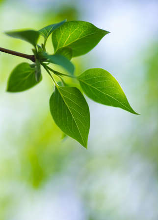 green lush foliage of tree on a blur backgrounds Stock Photo - 20331608