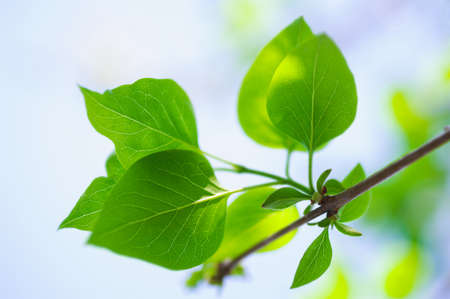 green lush foliage of tree on a blur backgrounds Stock Photo - 20331609