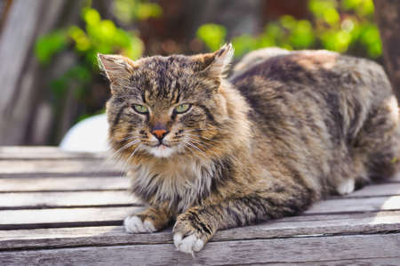 imperturbable: unruffled cat sitting and stern looking.