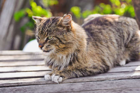 imperturbable: unruffled cat sitting and stern looking