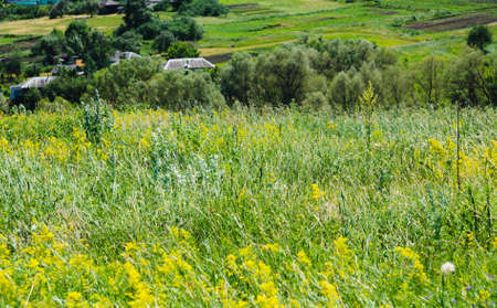 green summer meadow. rural nature backgrounds Stock Photo