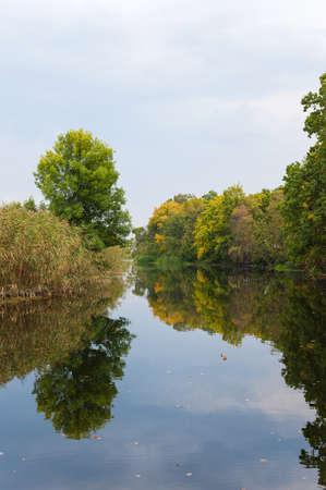 rushy: stream river around green trees and cane